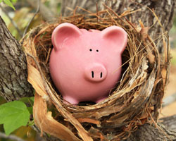 piggy bank in nest